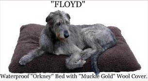 orkneydogbed