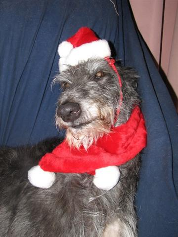 Happy Deerhound Christmas
