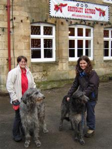 Deerhound, Chilli, Deerhound