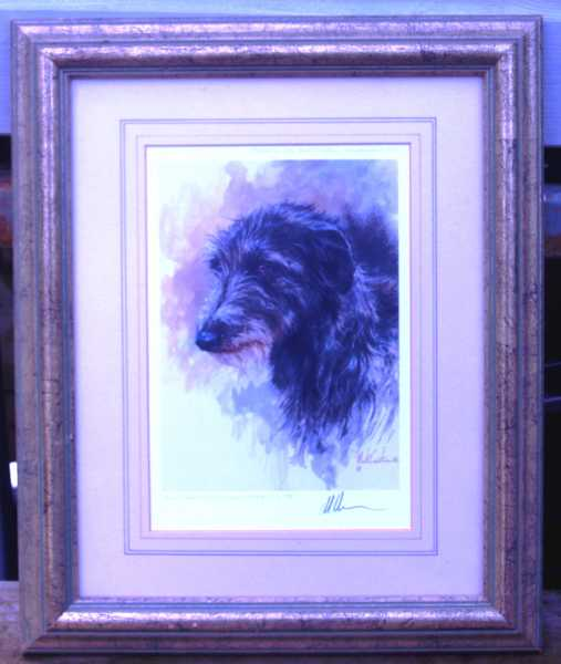 deerhound2.jpg