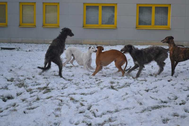 Our_Hound_Group_02_2012.jpg