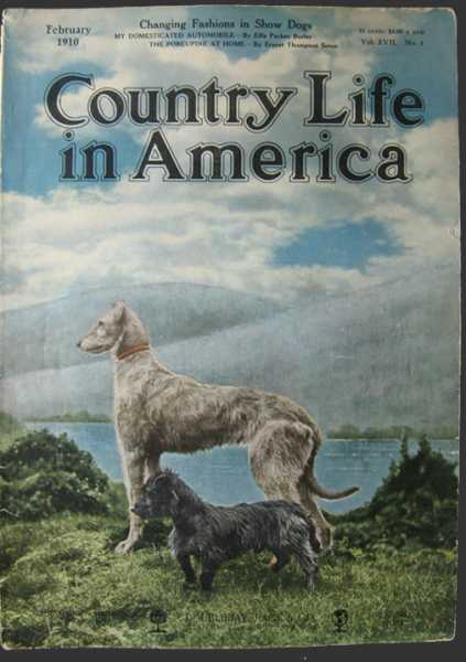 country_dogs.jpg