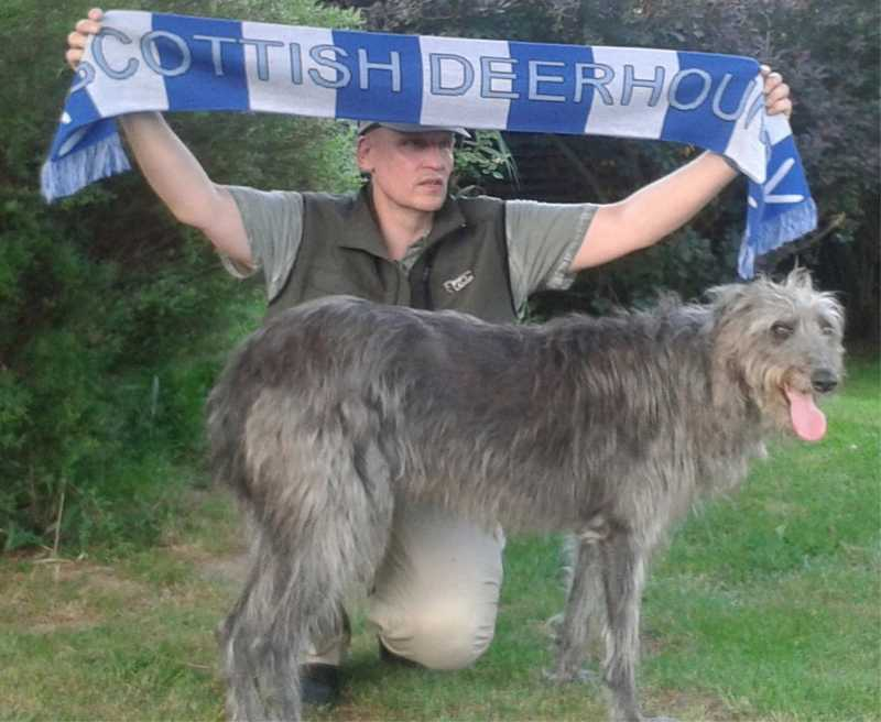 scarfyokiscottishdeerhound2.jpg