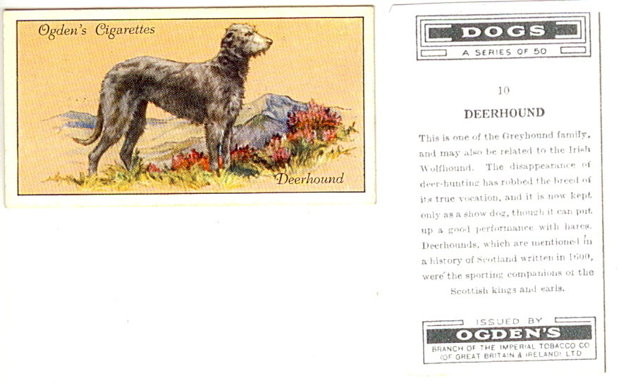 Deerhound_10_Ogdens1.jpg