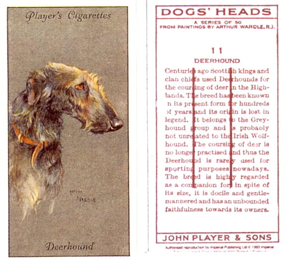 Deerhound_Players_11_1.jpg