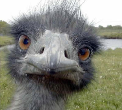 funny_photo_of_ostrich.jpg