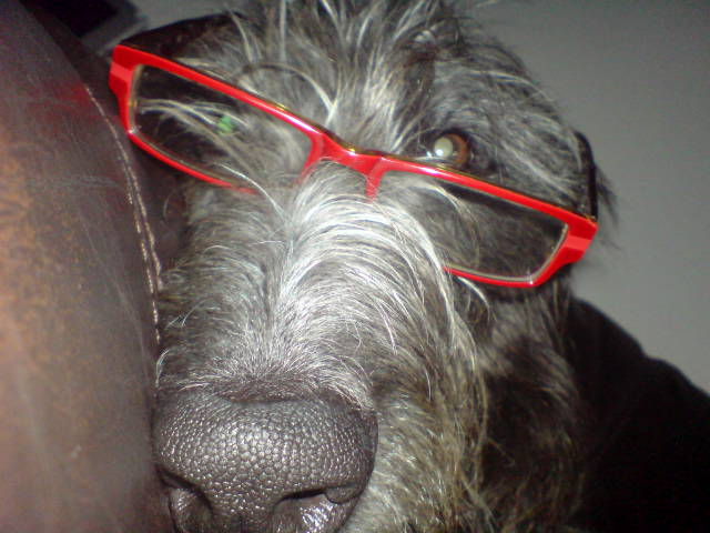intellectual_Dougal.jpg